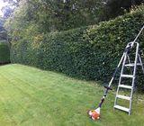 Gardener/Landscaping Dublin 085-1012750