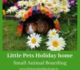 Small Animal Boarding @ Little Pets Holiday Home