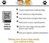 Experienced Dog Walker in Howth