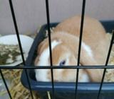 Bunny Rabbit 8 months old born 18 September 2019