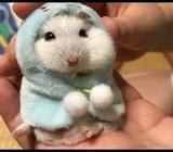 Friendly Hamsters