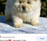 Looking for a puppy that will stay small