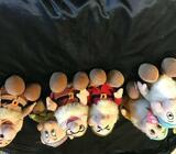 Disney dwarfs (6)