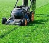 GRASS CUTTING AND GARDEN SERVICES